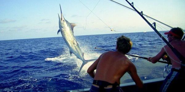 deep sea fishing trip dauphin island al